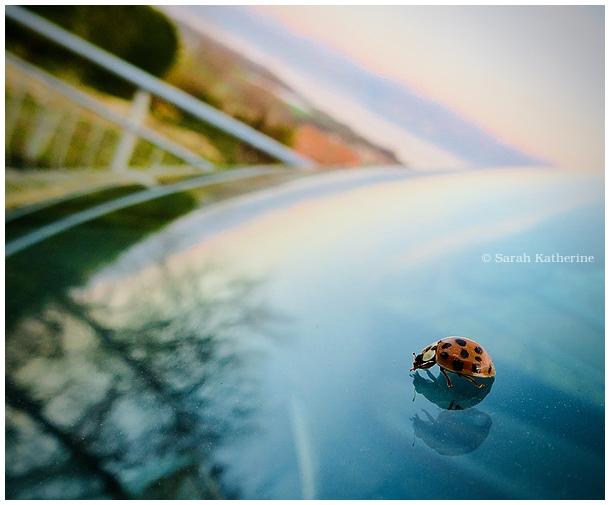 ladybug, spring, windshield