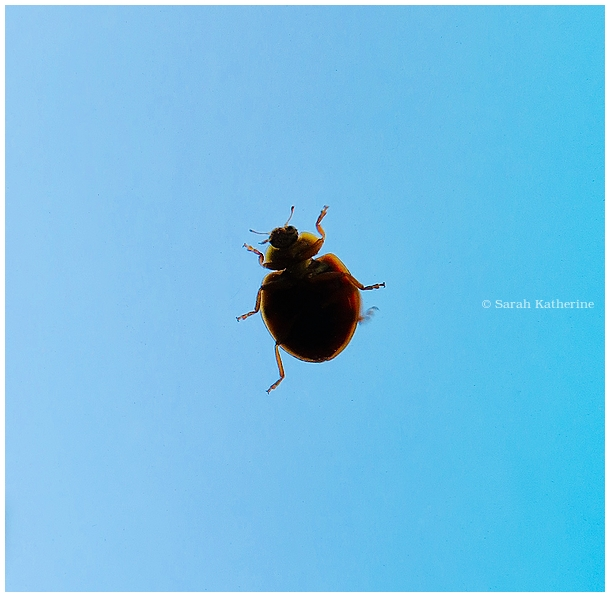 ladybug, skylight, summer, sky