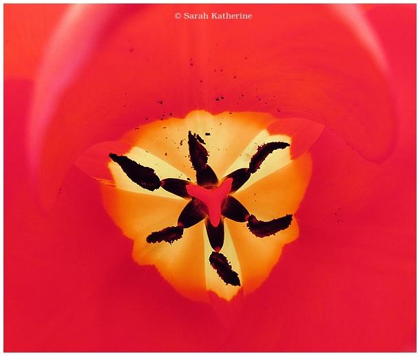 tulip, inner, vibe, spring,