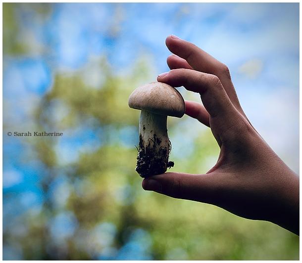 hand, mushroom, sprout, spring