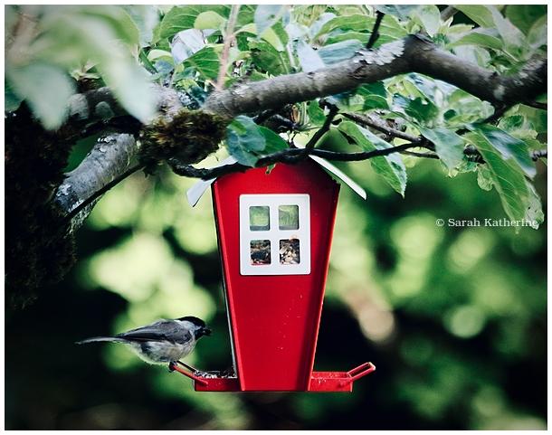 bird, apple tree, summer, seeds, bird feeder