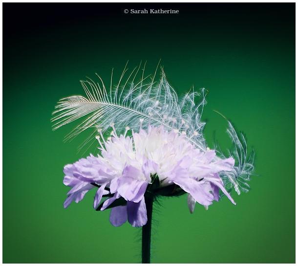 wildflower, feather, summer