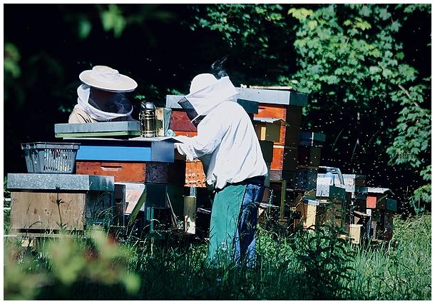 bees, hives, behives, beekeeping, summer, beekeep