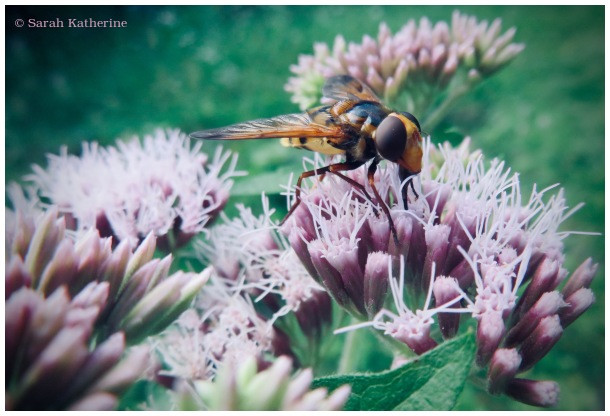 bee, summer, flowers
