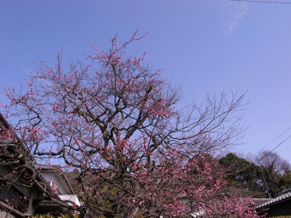 冬木の生めは花咲にけり
