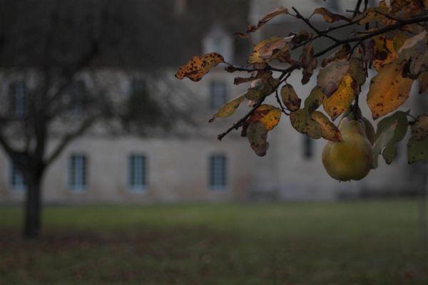 poire, automne, cistercienne,