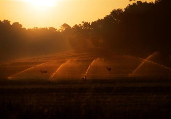 douche agricole