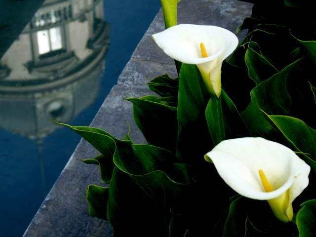 flores y reflejo