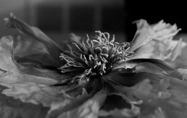 qinn photography flower emerge