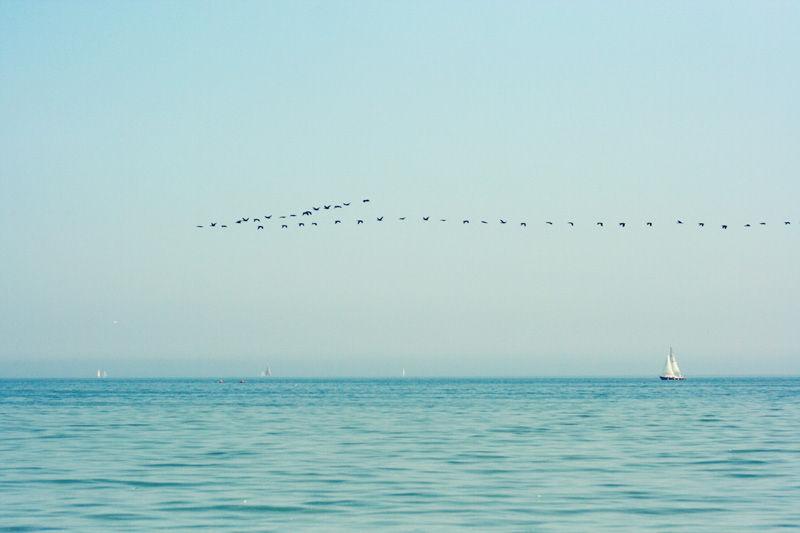 qinn photography toronto lakeshore sailboat