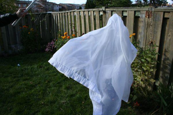 qinn photography toronto ghosts garden