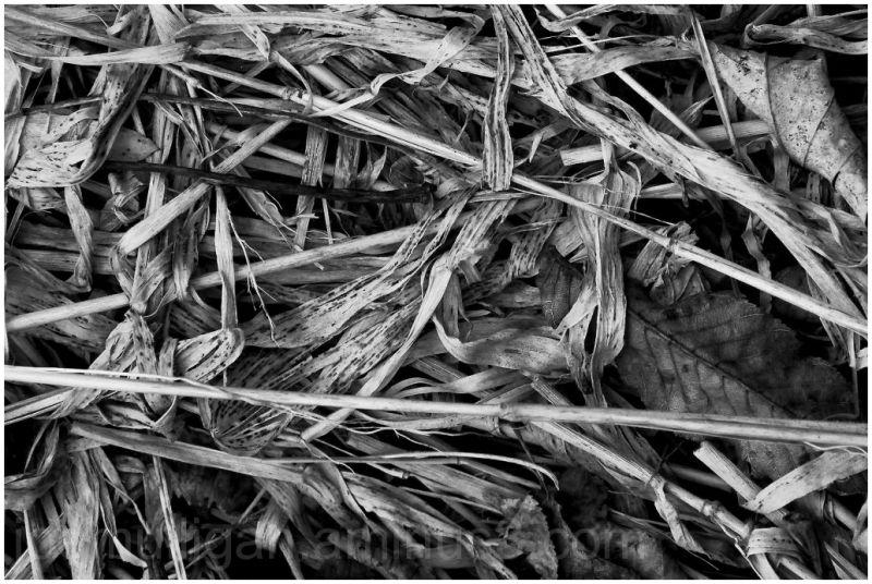 fallen river reeds nature b&w