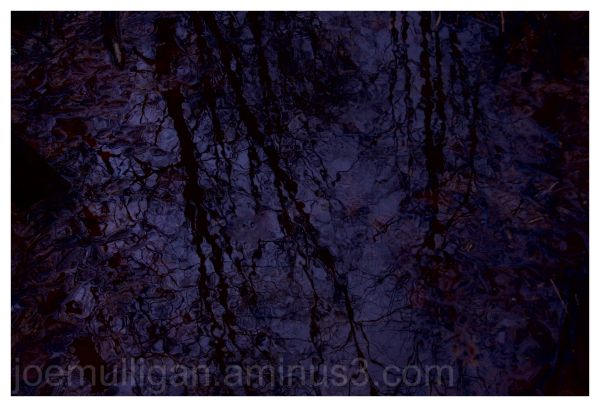 winter trees reflected in violet water