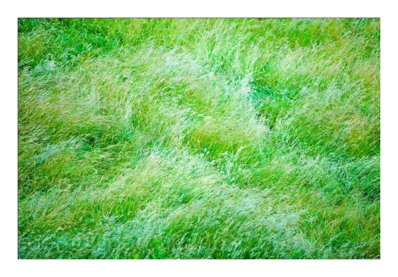 SUMMER GRASSES - 5