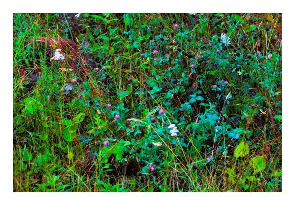 SUMMER GRASSES - 10