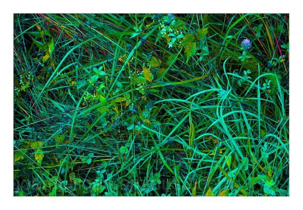SUMMER GRASSES - 14