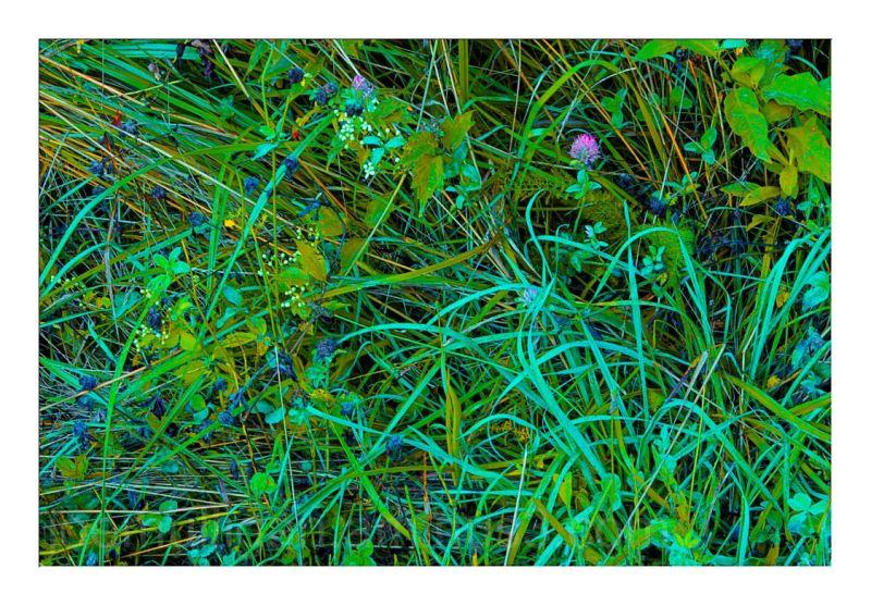 SUMMER GRASSES - 15