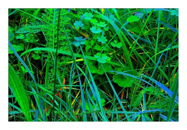 SUMMER GRASSES - 17