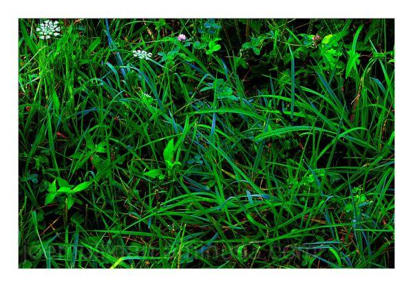 SUMMER GRASSES - 20