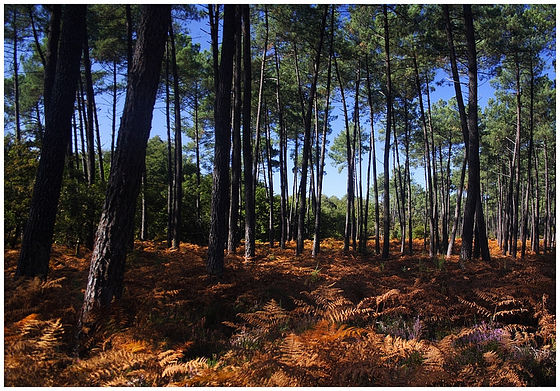 sous bois en automne