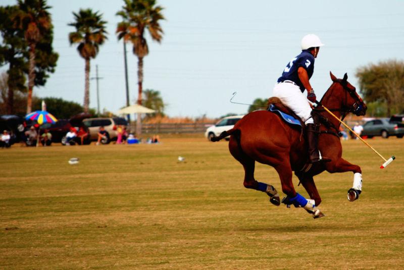 Flying Pony