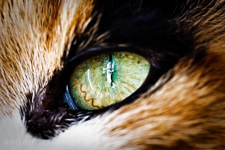 cat's eye macro