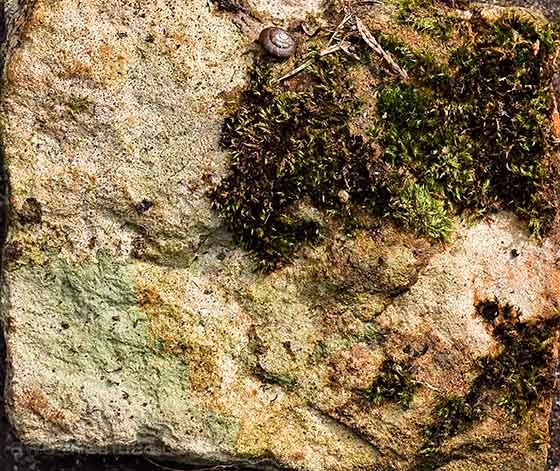 plant growth on textured stone