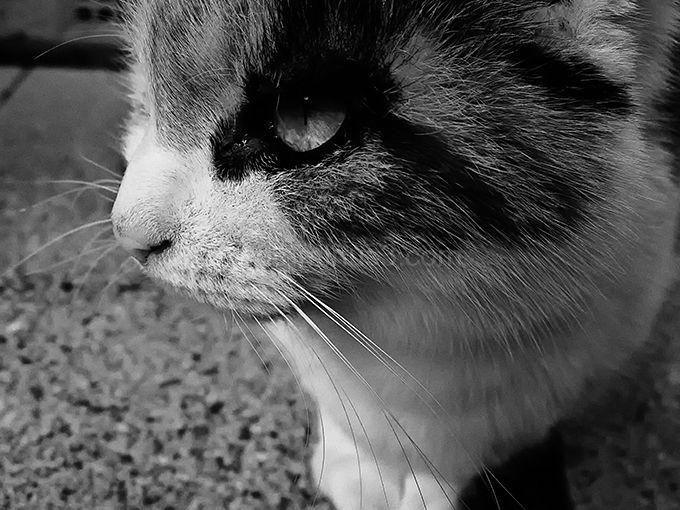 B&W cat