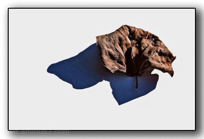 leaf shadow