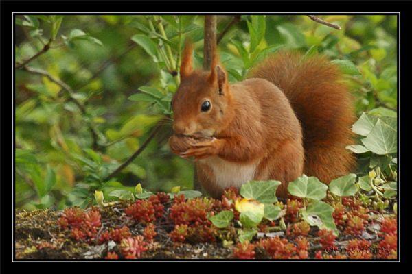 Squirrel 2/2