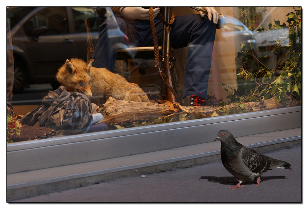 Le Renard et le Pigeon