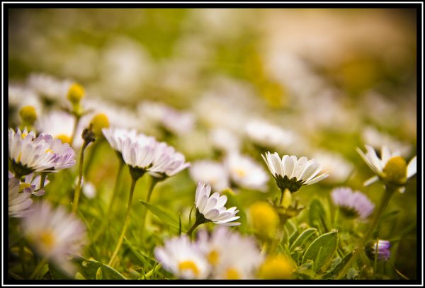 flores,primavera,spring,menorca
