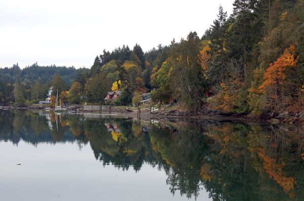Reflections of Fall Colours