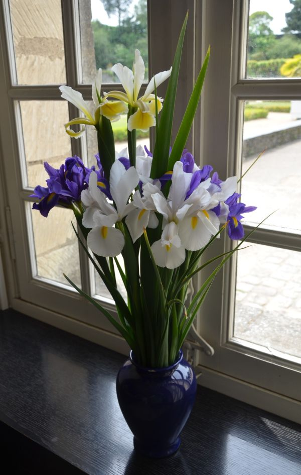 Iris in the Window