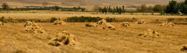 YellowHaystacks...