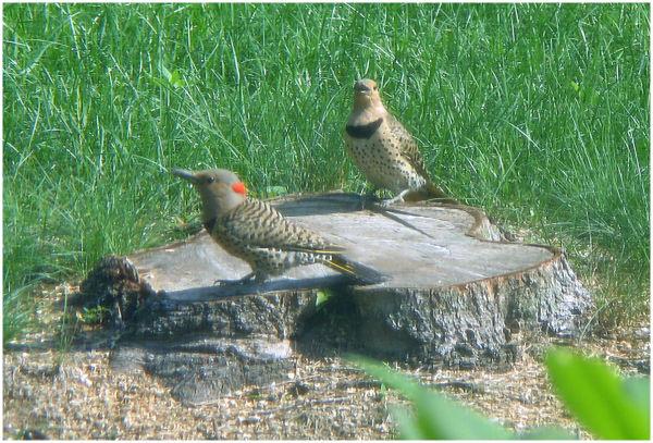 birds on a stump