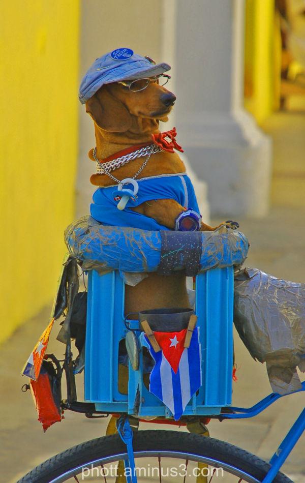 Weiner Dog Abuse?
