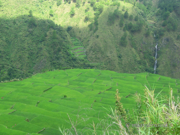 rice terraces with falls, going to sagada