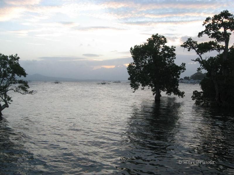 Mangroves at the Badjao Seafront Restaurant