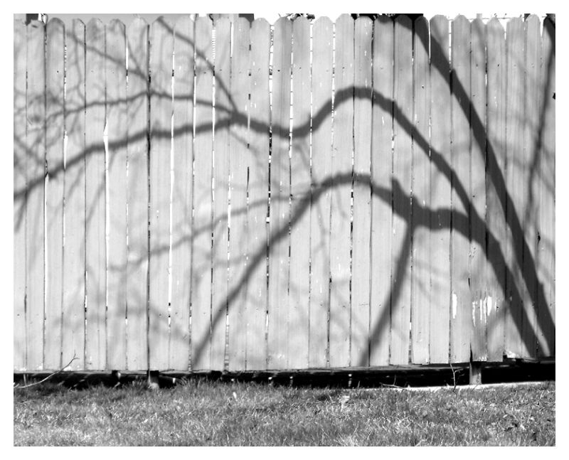 Shadow on our neighbor's fence