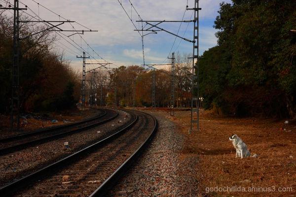 Temperley Railway Dog