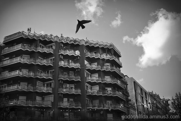 Dove, City, Barcelona, Building