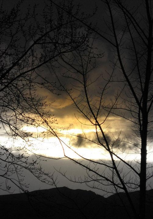 Cloudy winter sunset seen through barren trees