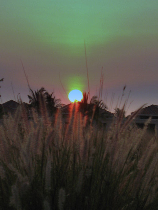 Sunset and grasses in Hawaii