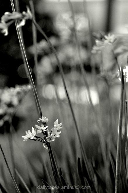 flowers societygarlic