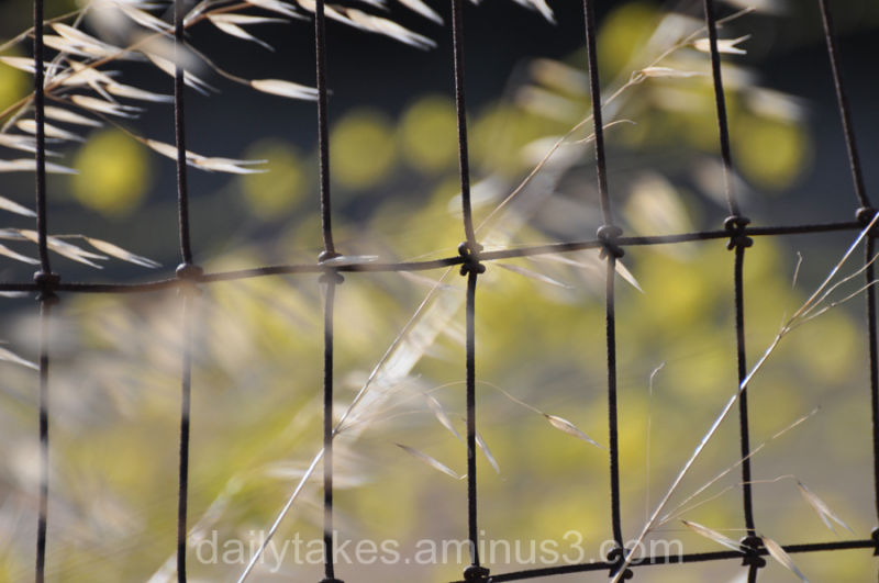 barbed-wire fence ~ 2