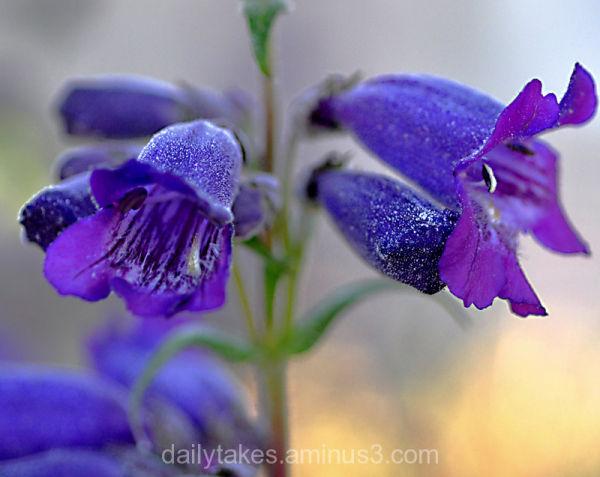 purple of my heart