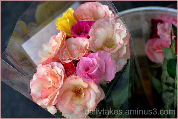 rose bouquets in a bucket