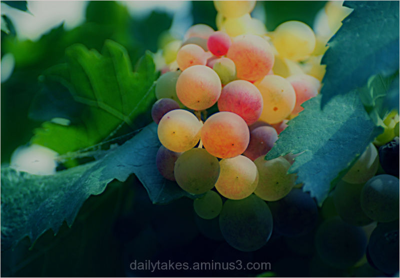 abstract plants grapes