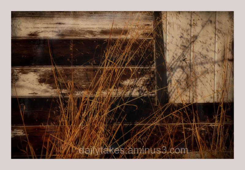 landscape barn-wall grasses